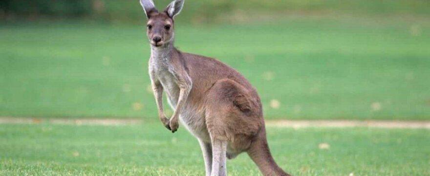 Come spedire un pacco in Australia in modo facile e veloce